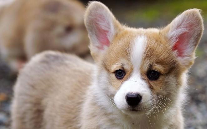 Plemena malých psů foto