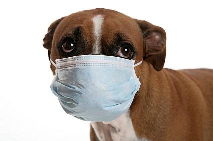 Když má pes rýmu