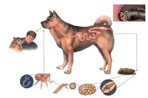 Střevní paraziti u psů