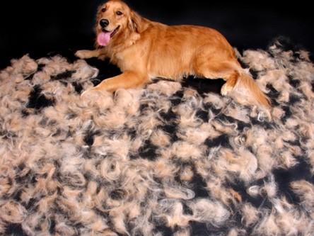 Pes který nelíná
