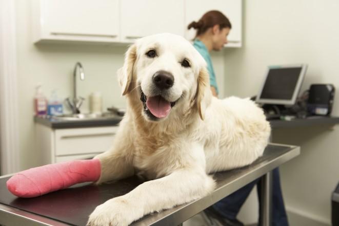 Pes kulhá na přední nohu