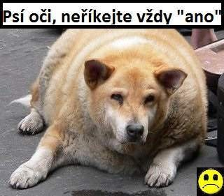 Krmivo pro psy dietní granule