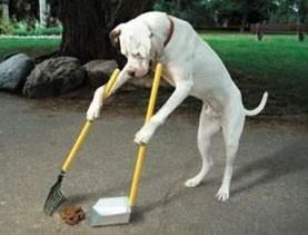 Jak naučit psa nečůrat doma