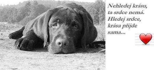 citáty o psech Citáty o psech a lidech   Psí úsměv citáty o psech